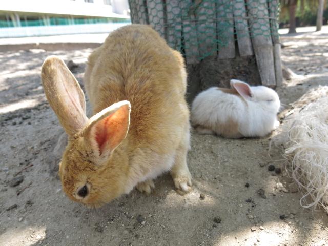 ウサギ島0041