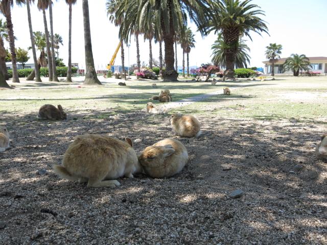 ウサギ島0042