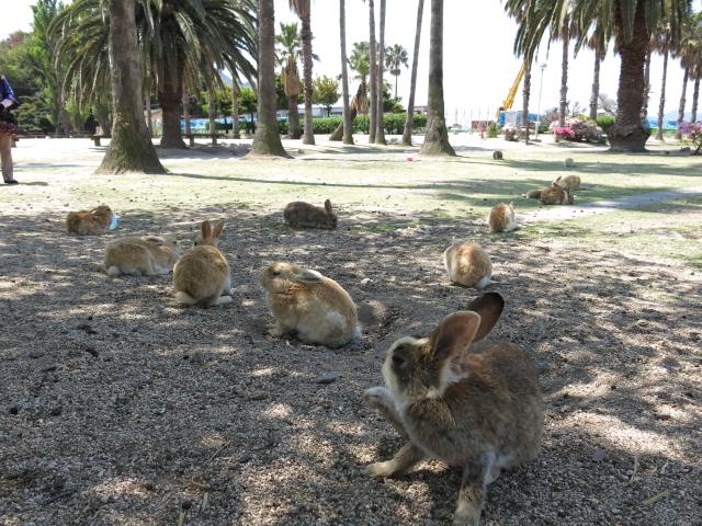 ウサギ島0043