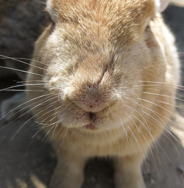 ウサギ島 アップ