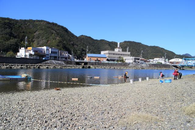津島しらうお産業まつり20154