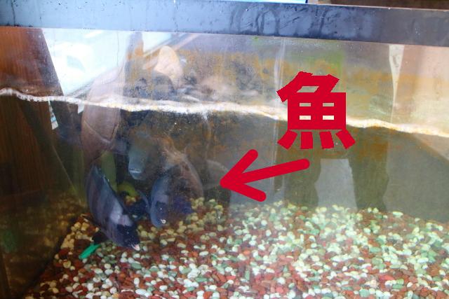 活魚レストラン藤・高知・海鮮丼17