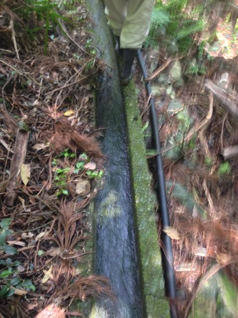 山の中の水源