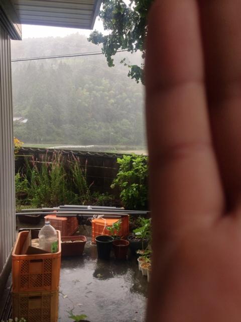 今日も雨!