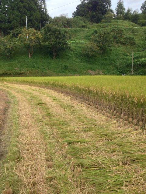 直った僕は稲を刈った