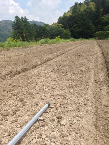 生姜畑でカロリー消費