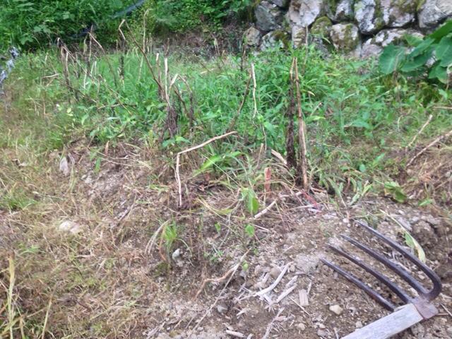 なぜカレーを作ったのか。そこにジャガイモが埋まっていたからだよ