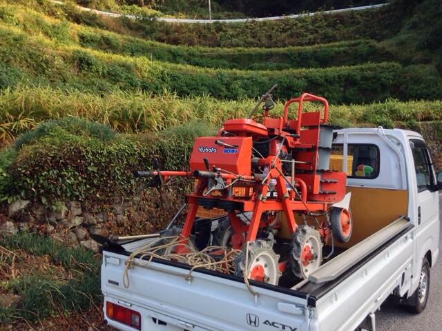 生姜の収穫二日目