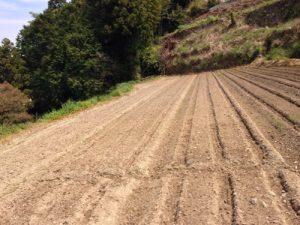 正しい生姜の植え方
