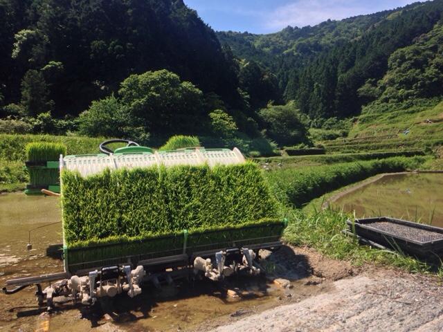 アゼから植えるパターン「田植え」とオバ=アのウェルカムボード