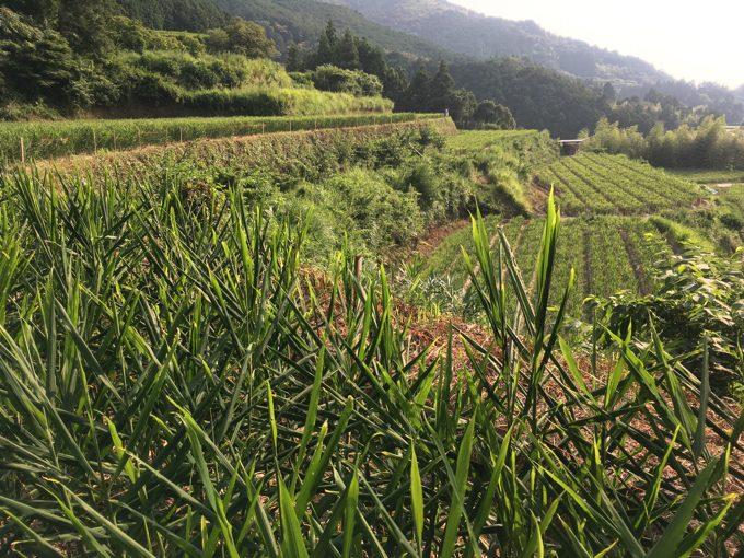 雨の影響をまともに受ける露地農業。高知市の降水量・平年比8%!
