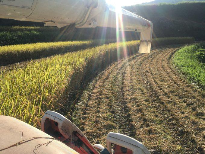 乾かない田んぼ。泥だらけのコンバイン。スタックの危険と恐怖の稲刈り