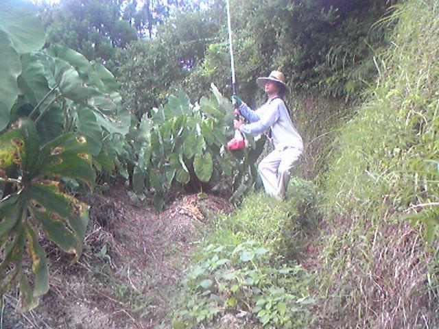 草刈機(刈払機)でガニ股打法の種田風