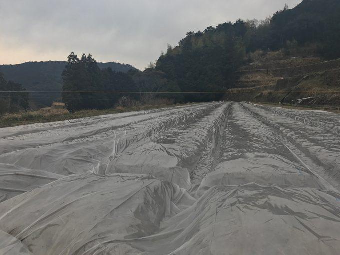 生姜畑の作成完了・2017