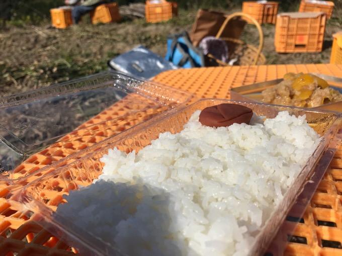 生姜畑で食べるごはん