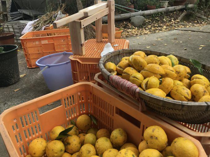 ゆずの果実とゆず絞り器