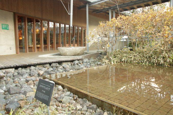 牧野植物園 園内の風景