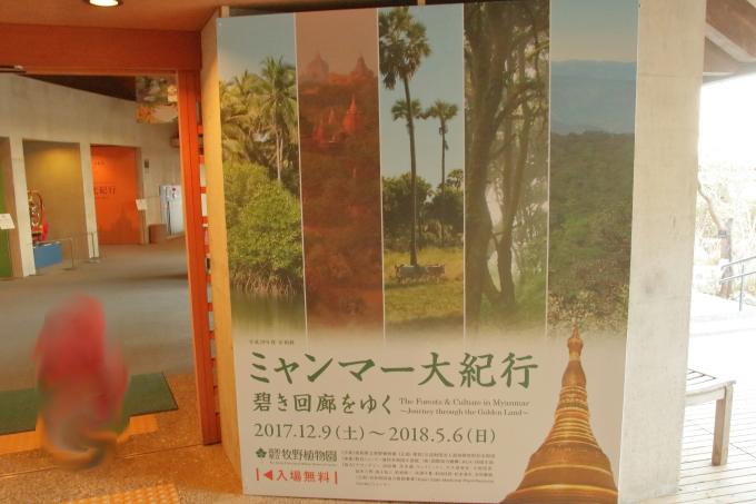 高知県立牧野植物園・ミャンマー展