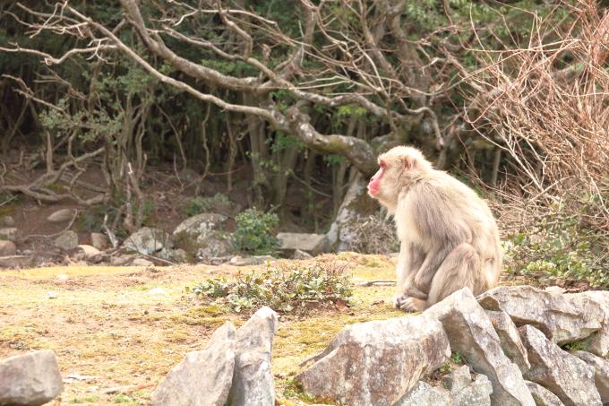 小豆島 銚子渓小豆島 銚子渓 お猿の国の猿 お猿の国