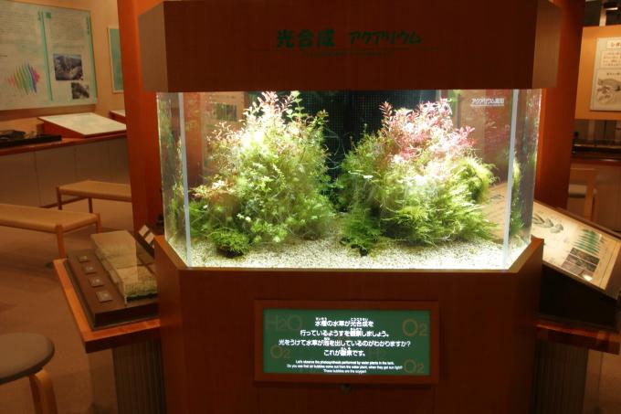 牧野植物園の水草
