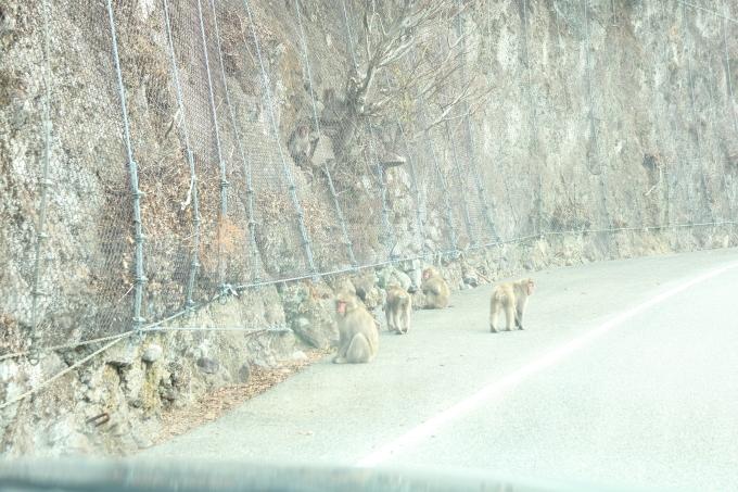 小豆島 銚子渓 お猿の国