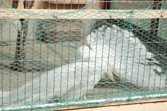小豆島 銚子渓 お猿の国の白孔雀