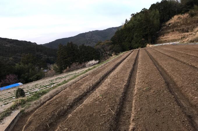 生姜畑を作る