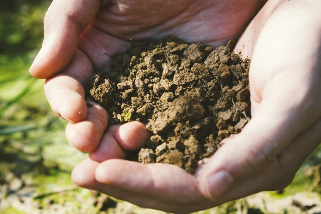 畑の土づくり