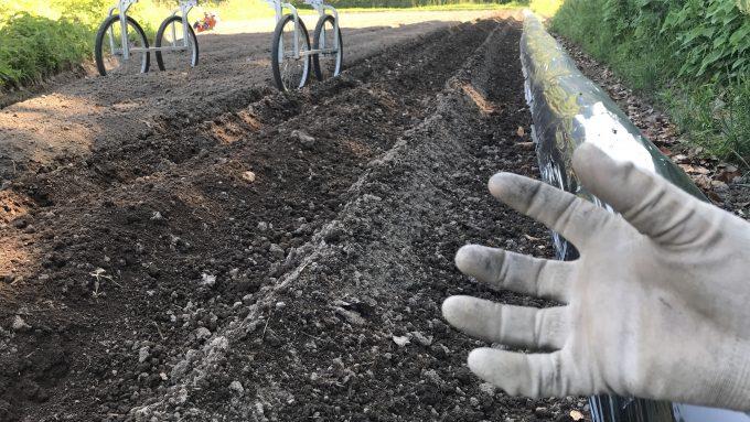 生姜植え付け中の畑