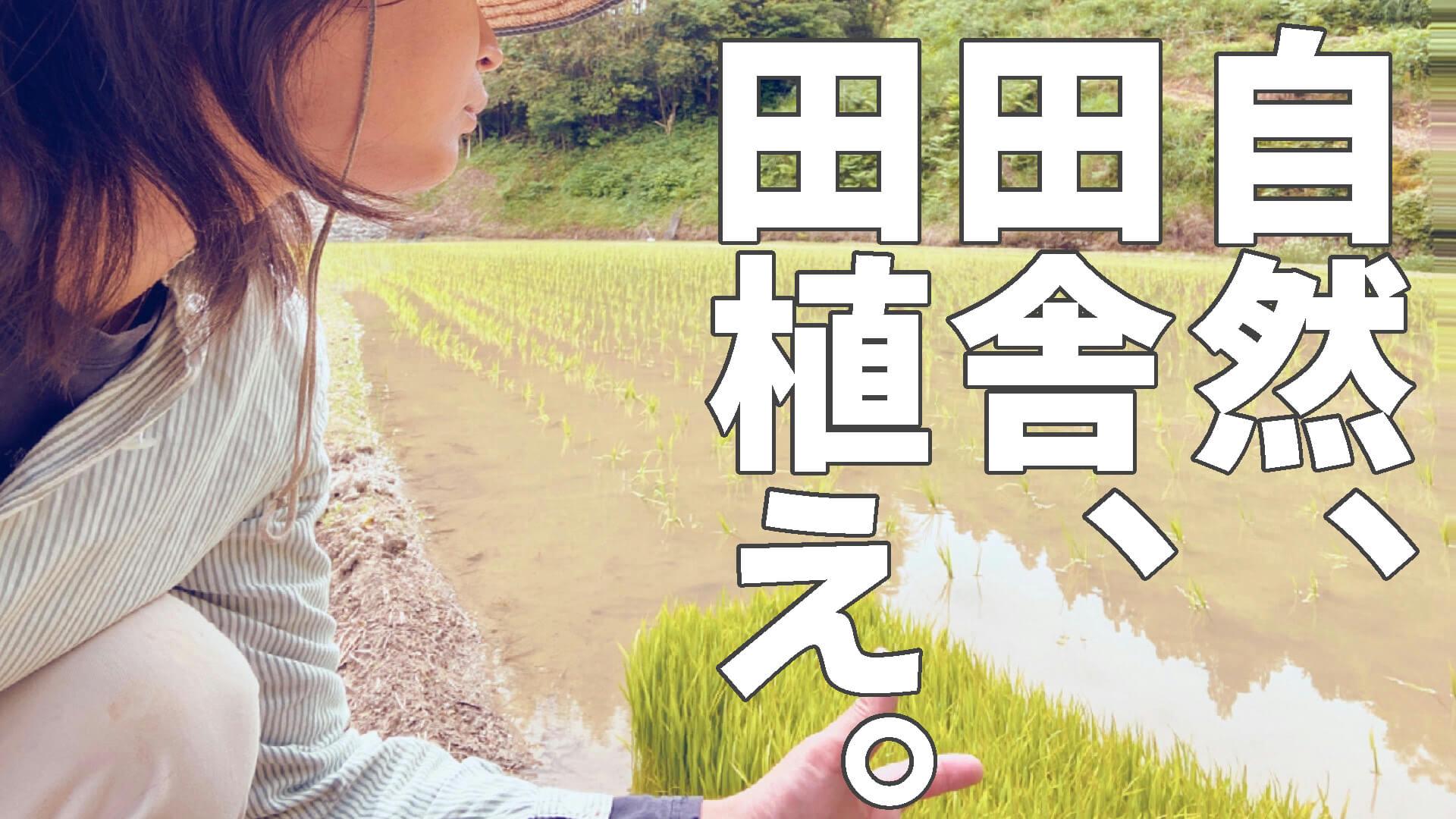 【実録】田舎で自然に囲まれて働く農家の田植え